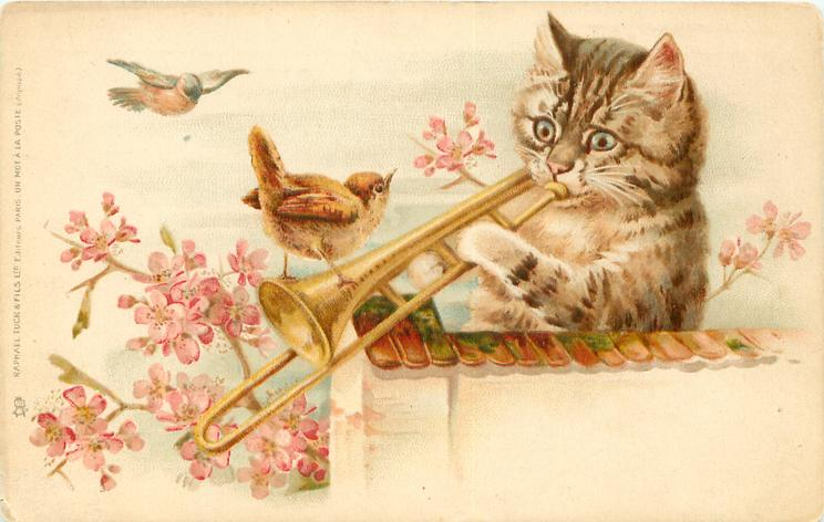 Cat Behind Wall Plays Trombone Wren Perches On Instrument