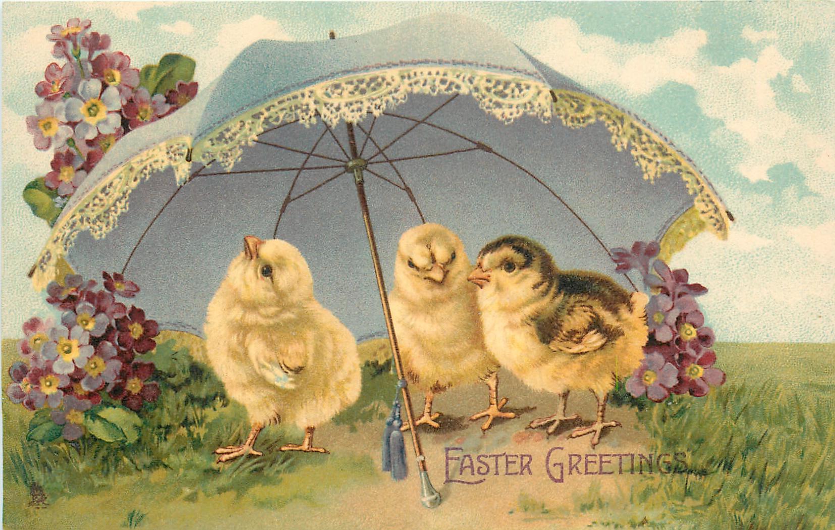 Easter Greetings Three Chicks Under Parasol Violets Around