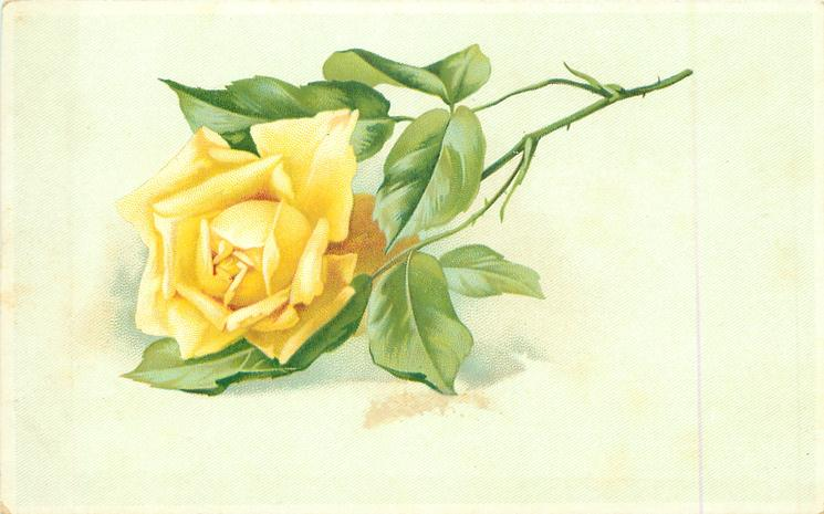 Single Yellow Rose Stalk To Right TuckDB Postcards