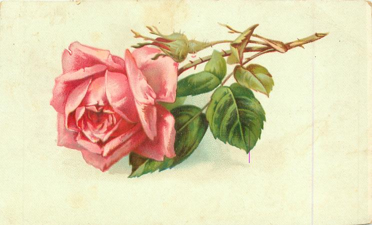 Single Pink Rose Stem To Right TuckDB Postcards