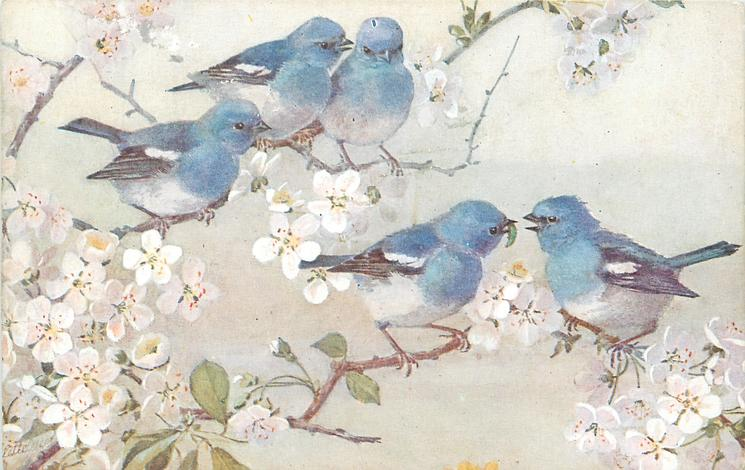 Five Blue Birds On Blossom Tree Three Above Two Below