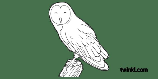 Barn Owl Bird Animal Woodland Farm USA KS1 Black and White