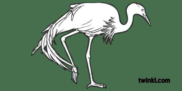 Blue Crane Bird Animal South African Birds Open Eyes KS1