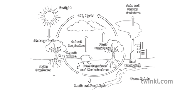 Carbon Cycle Diagram Climate Crisis Carbon Cycle New