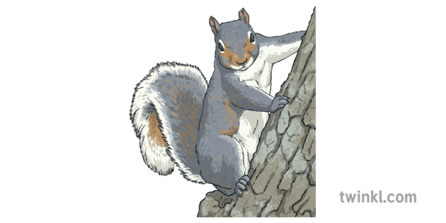 eastern gray squirrel north