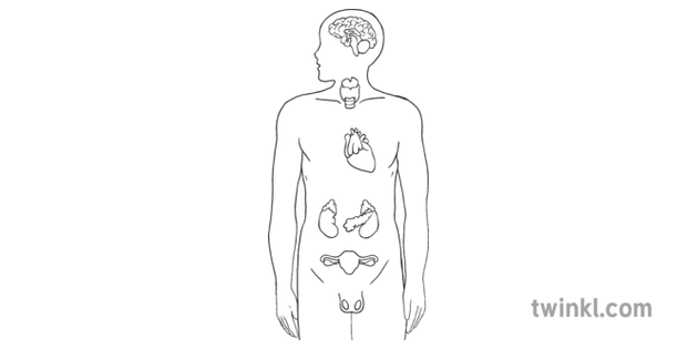 Endocrine System Science Biology Human Body MPS KS2 B and