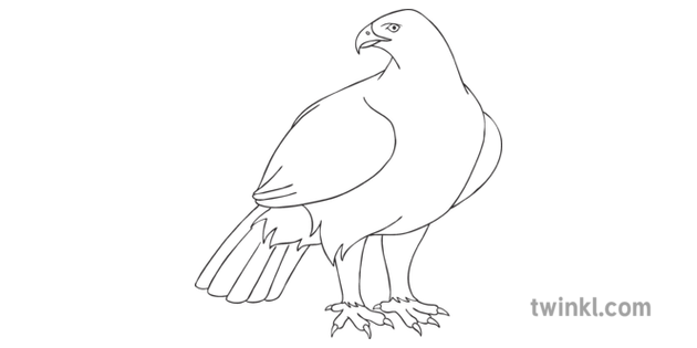 How to Draw a Golden Eagle Step 10 Art Bird Instructions