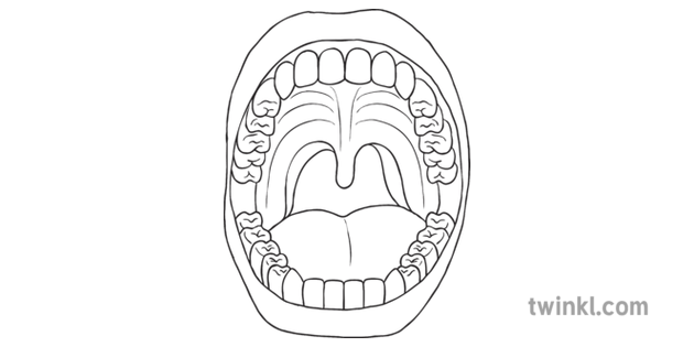 Mouth with Teeth Diagram Digestion Science KS2 Black and