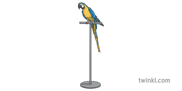 parrot on stand macaw