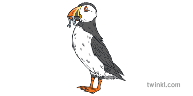 Puffin and Fish Animal Rathlin Island Bird Cliffs Seabird