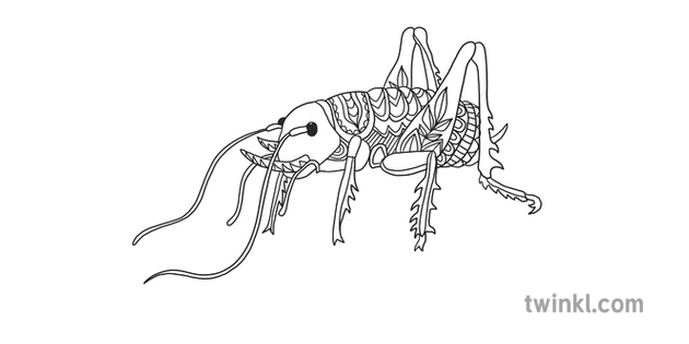 Weta Mindfulness New Zealand Bugs Colouring Illustration