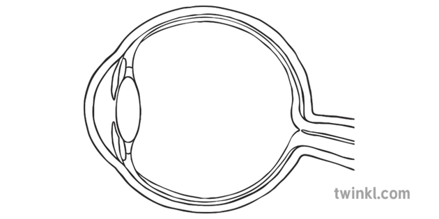Diagram of the Eye Side View No Labels Black and White