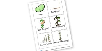 Bean Life Cycle Early Years (EYFS), bean, plant, seed