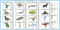 Classification of Vertebrates Cards - vertebrates, different