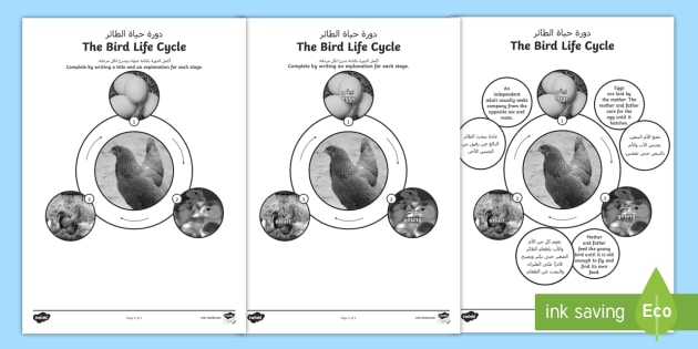 bird life cycle diagram marine power wiring new worksheets arabic english science animals ks2
