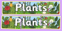 Plants Display Banner