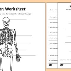 Names Of Bones In Human Skeleton Diagram Skateboard Deck Worksheet The Our Bodies