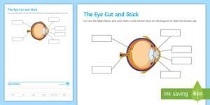 The Eye Cut and Stick Worksheet  Worksheet  Cut and