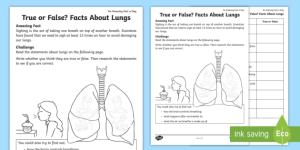 True or False Facts About the Lungs Worksheet  Activity Sheet