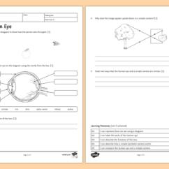 Reflection Ray Diagram Ks3 1999 Toyota 4runner Wiring Light Waves Teaching Resources The Human Eye Homework Worksheet