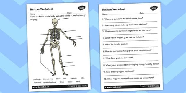 Skeleton Worksheet Scientific Names