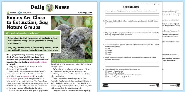 * New * Uks2 Koalas At Risk Daily News Story