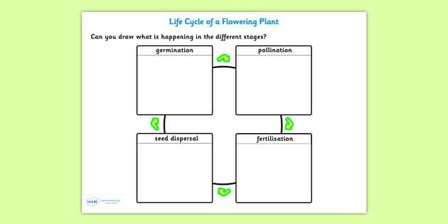 cross pollination diagram for kids da3000 door access wiring fertilisation seed dispersal and germination worksheet