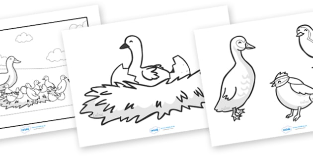 The Ugly Duckling Story Coloring Sheets (teacher made)