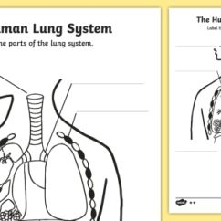 The Lung Anatomy Diagram Label 7 Pines Resort With Labels Worksheets Wiring Schematics Human Body Lungs Labelling Worksheet Ourselves Rh Twinkl Co Uk Labeled Model