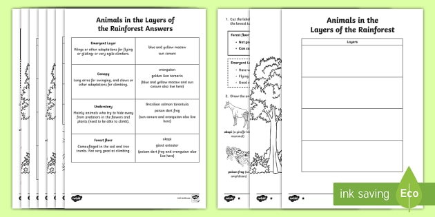 amazon rainforest layers diagram and wiring editable animals in the of read draw worksheet activity sheet