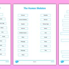 Names Of Bones In Human Skeleton Diagram Goat Intestines Labelling Sheets Scientific - Body, Labels