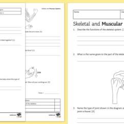Muscular System Diagram Worksheet Vr6 Ecu Wiring Ks3 Skeletal And Systems Homework