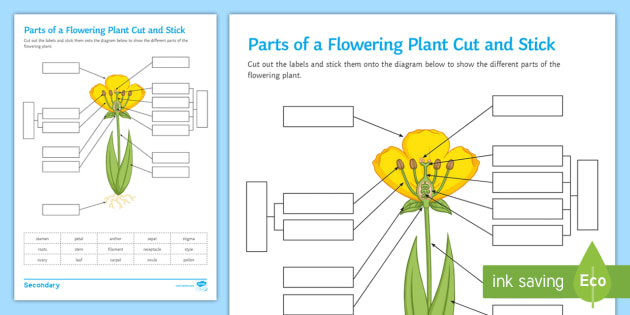 diagram of a flowering plant with label 1985 corvette cooling fan wiring parts cut and stick worksheet flower