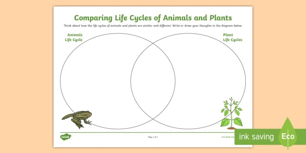 diagram of perfect flower lily 1997 ford escort wiring comparing plant and animals life cycles venn worksheet