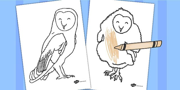Owl Coloring Sheets Teacher Made