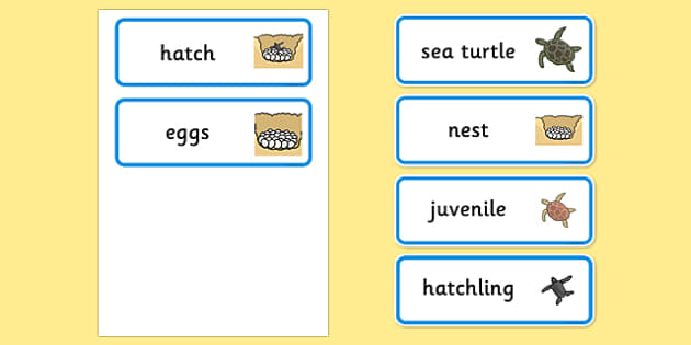 Free Sea Turtle Life Cycle Word Cards Under The Sea
