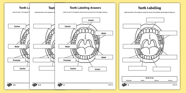blank volcano diagram printable 2006 pt cruiser engine teeth labelling worksheet - teeth, ourselves, my body, labels