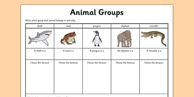 Animal Group Worksheet