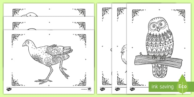 New Zealand Birds Mindfulness Colouring Pages Aotearoa