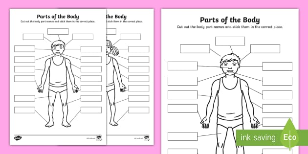 Body Parts Cut And Stick Worksheet Teacher Made