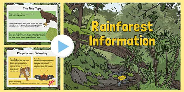 Rainforest Information PowerPoint Rainforests