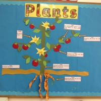 Parts of a plant display