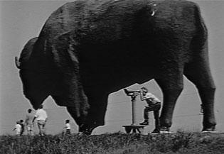 Giant statue of a buffalo
