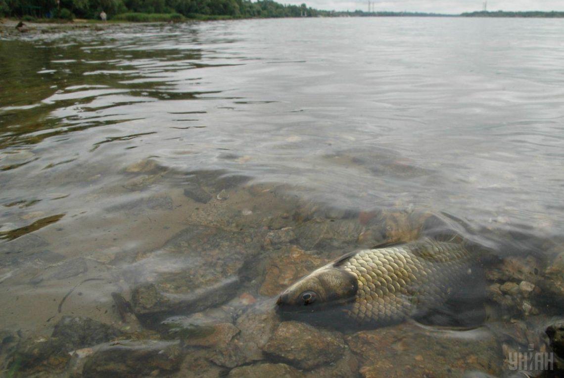 В украинских водоемах начала исчезать рыба / фото УНИАН
