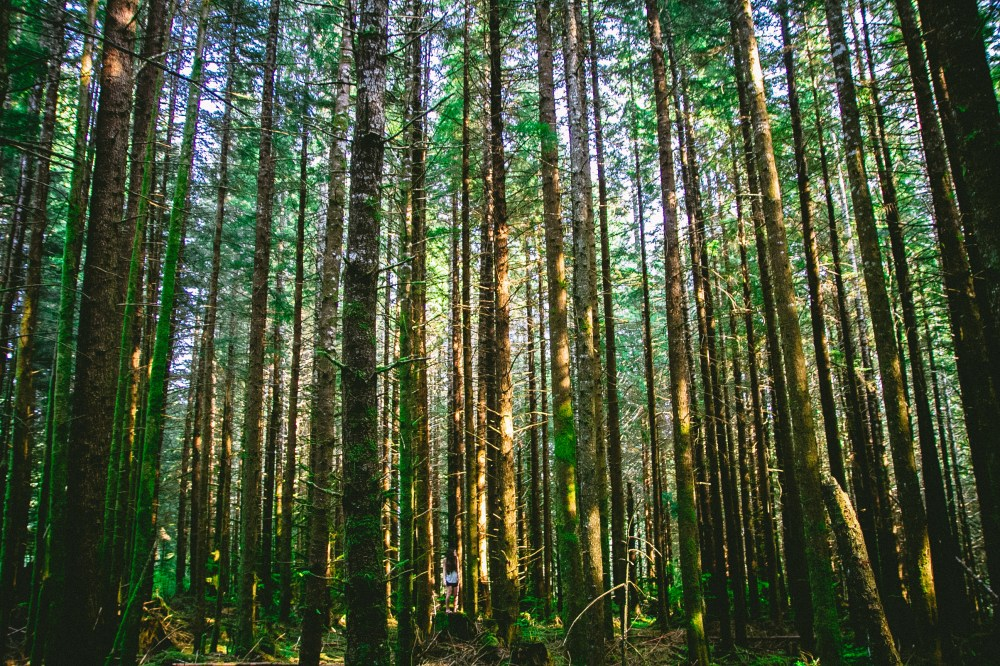 tall trees pictures download