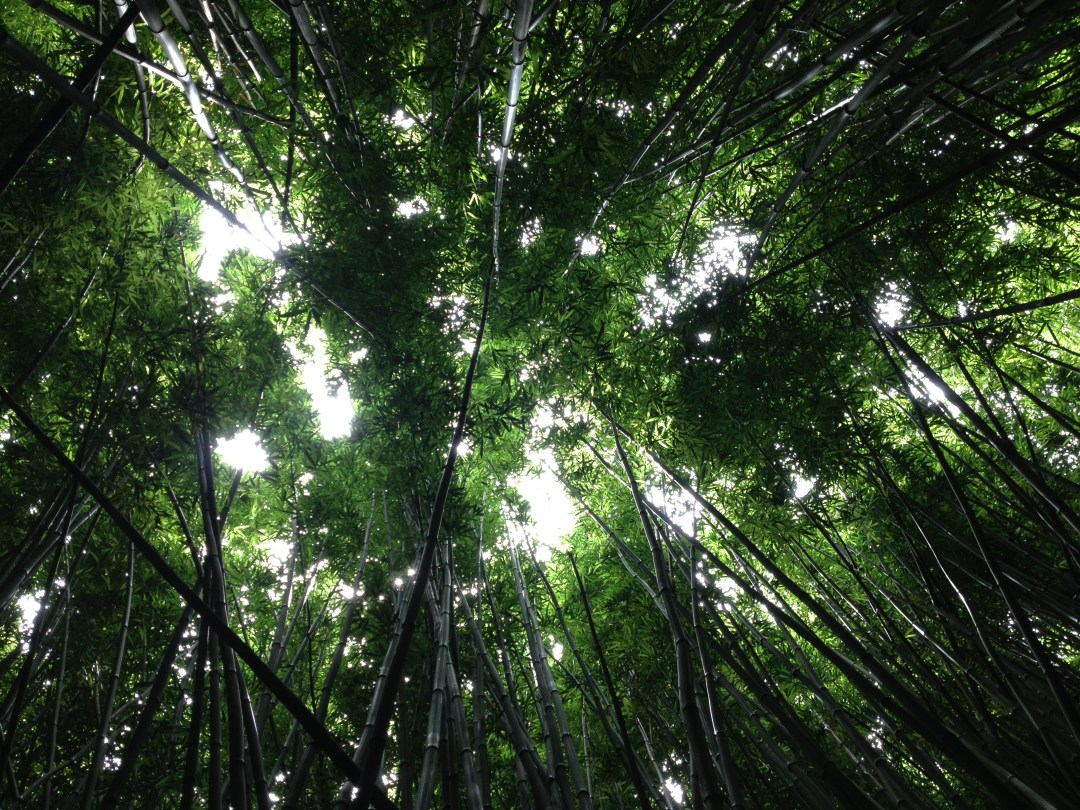 Hd Images Wallpaper Free Download Dark Green Bamboo Canopy Photo By Kaitlyn Jameson Willsk