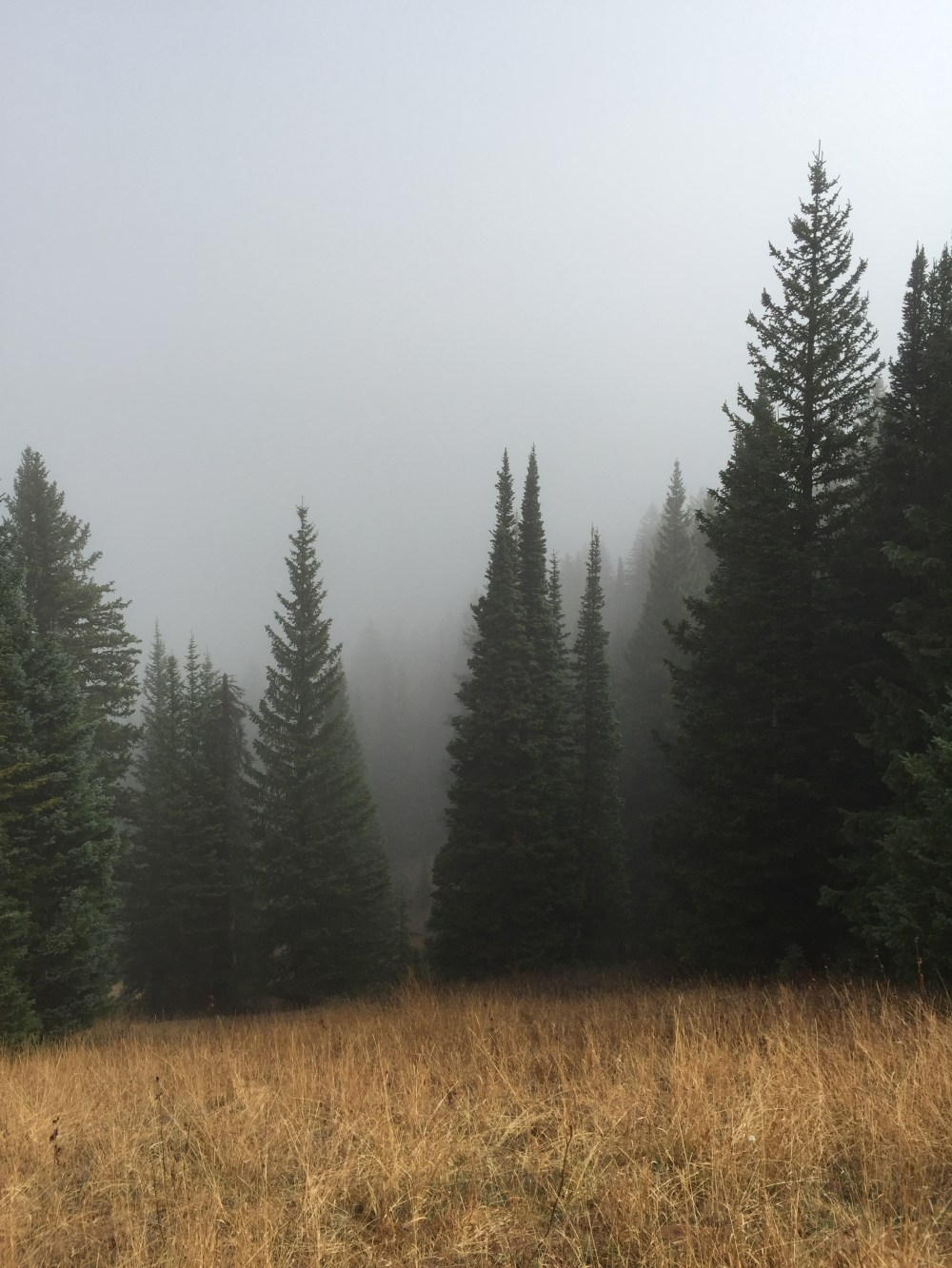 Keyword Tree Forest Pine And Mist Hd Photo By Bradley Swenson