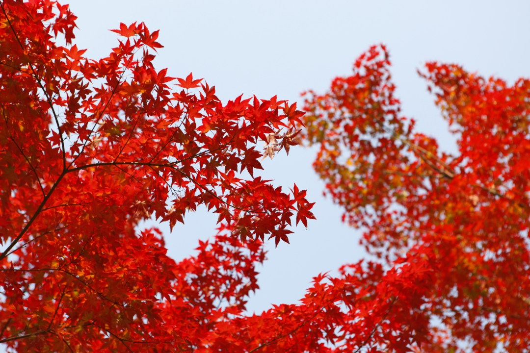 Fall Of The Leafe Wallpaper Tree Autumn Leafe And Foliage Hd Photo By Daniel Kim