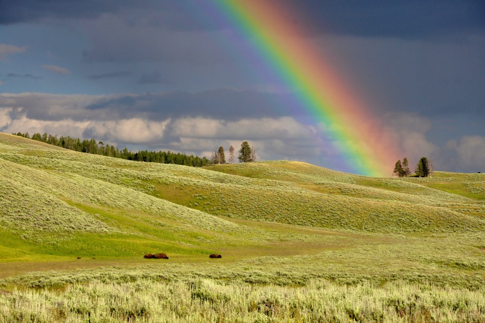 rainbows pictures download free