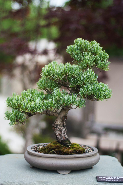 Bonsai Wallpaper : bonsai, wallpaper, Bonsai, Pictures, Download, Images, Unsplash